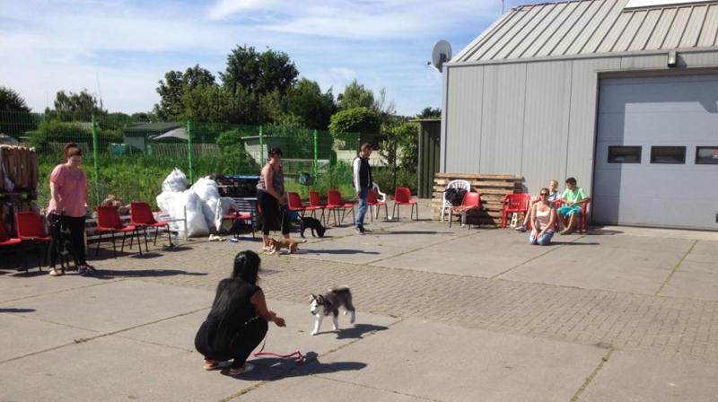Hondenschool