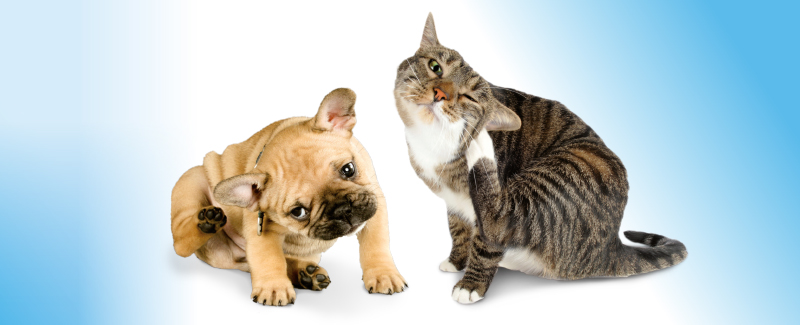 Pets Health parasieten