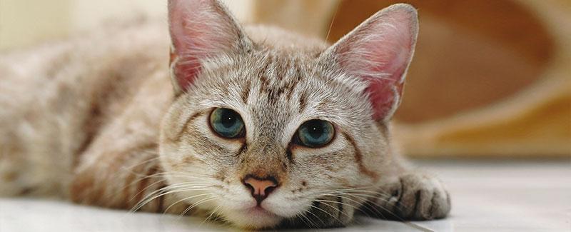 Plast uw kat regelmatig in huis?